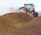 Occupational asthma: Composting workers show no accelerated FEV1 decline in Germany